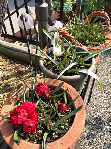 gardening469