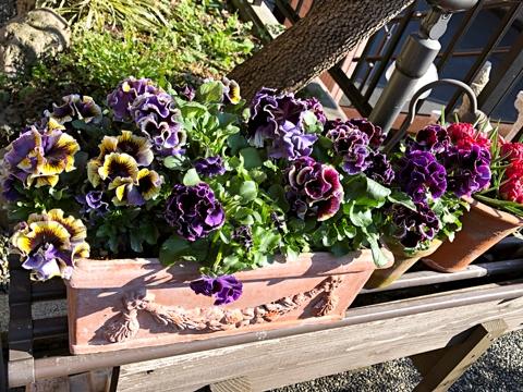 gardening473