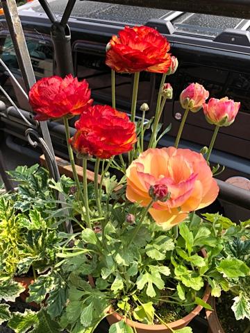 gardening479