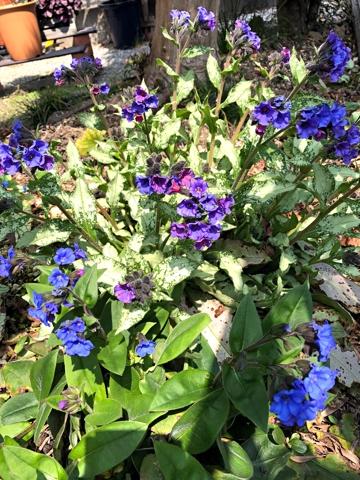 gardening483