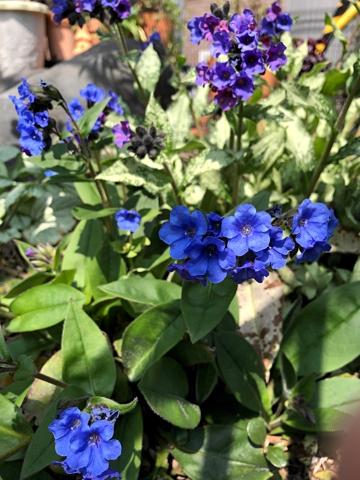 gardening484