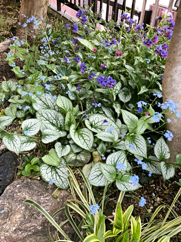 gardening485