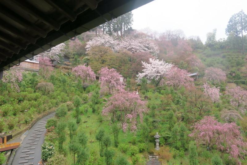 白山桜苑2