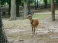 190623発信機の首輪付けた鹿