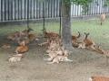 190623木陰に集まる子鹿