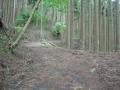 190518杉の枝葉で埋まる路面