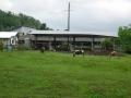 190621山田牧場の馬を横目に神山から小川へ