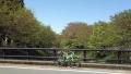 190420さくらまつりも終わり、玉川の桜も葉桜に