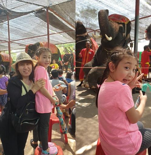 Elephant show 001