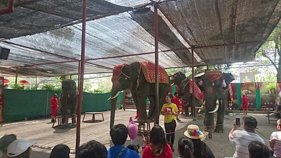Elephant show (4)