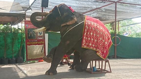 Elephant show (5)