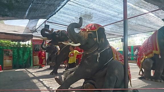 Elephant show (6)