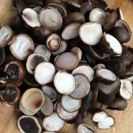 Phao mushroom (3)