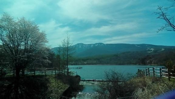 バラギ湖の桜 no1