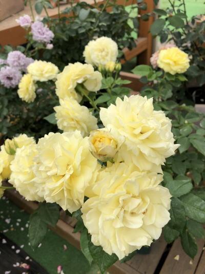 ブログ0622フレッシュレモン