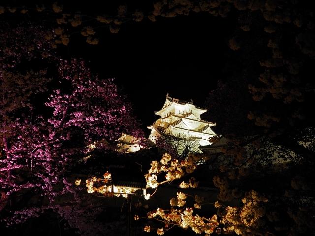 190405夜桜会1