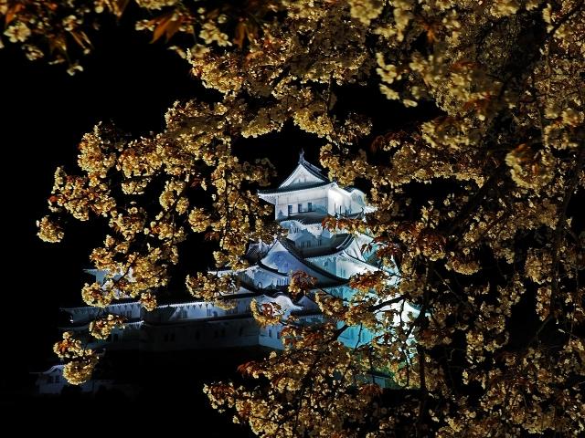190405夜桜会2