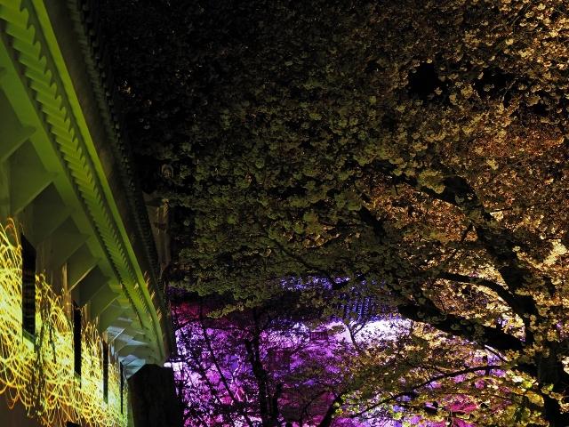 190405夜桜会3