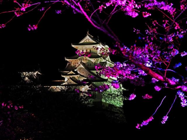 190405夜桜会6