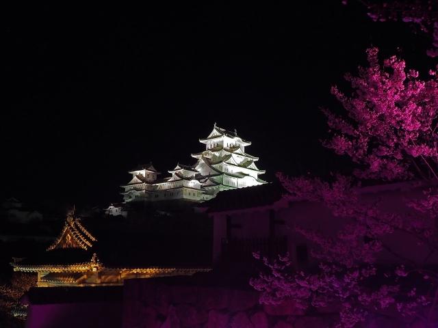 190405夜桜会8