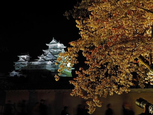 190405夜桜会13