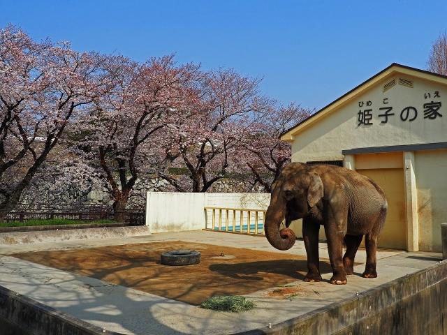 190406姫路城3