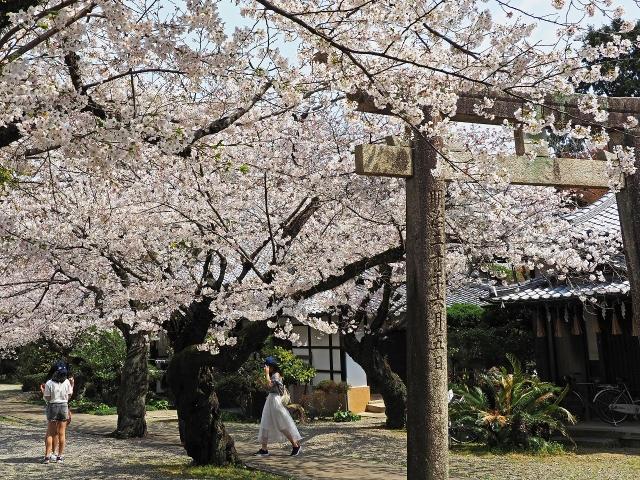 190406姫路城14