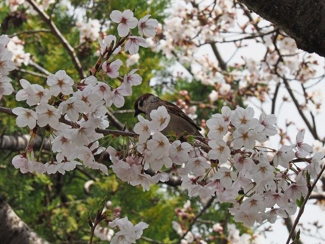 190406姫路城16