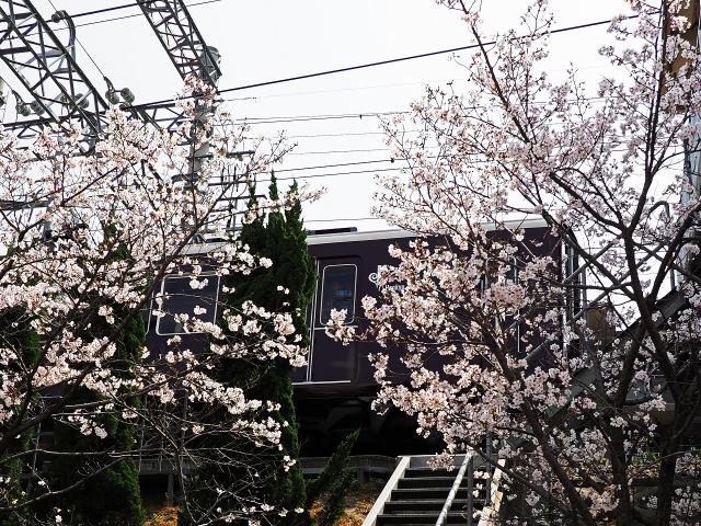 190407夙川5
