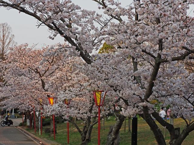 190407日岡山公園2