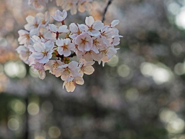 190407日岡山公園8