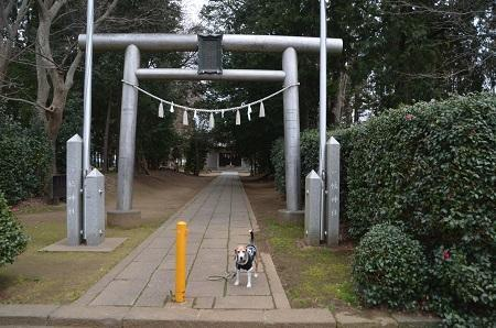 20190227郡本八幡神社01