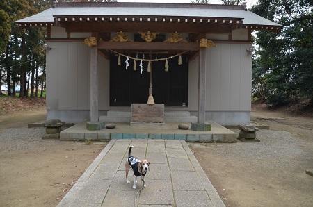 20190227郡本八幡神社07