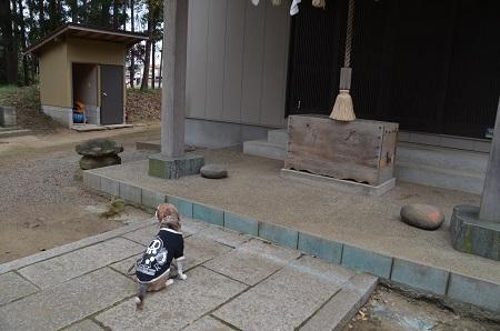 20190227郡本八幡神社13
