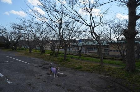 20190309旧・中川小学校13