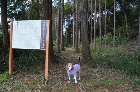 20190309桜花43乙特攻基地跡02