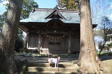 20190309松尾神社09