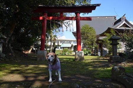 20190309松尾神社07