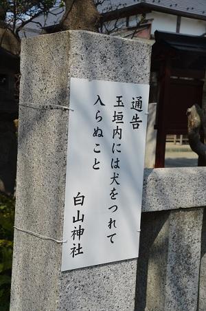 20190317白山神社20
