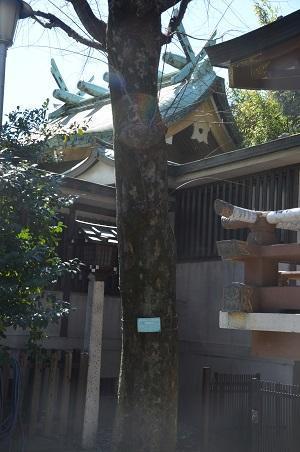 20190324下落合氷川神社11