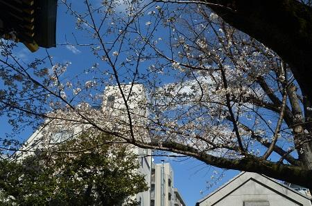 20190324穴八幡宮19