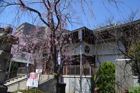 20190404亀戸香取神社10