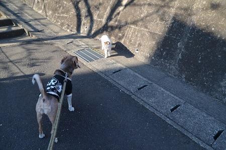 20190413坂散歩06