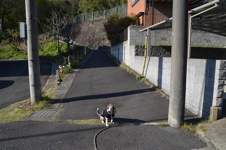 20190413坂散歩03