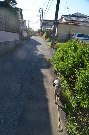 20190413坂散歩02