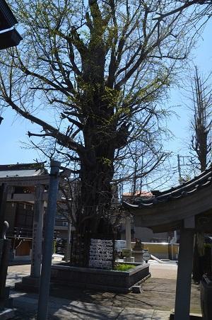 20190413飛木稲荷神社29
