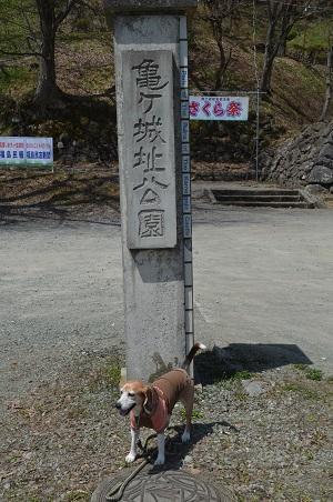 20190422亀ヶ城跡01