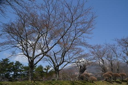 20190422亀ヶ城跡14