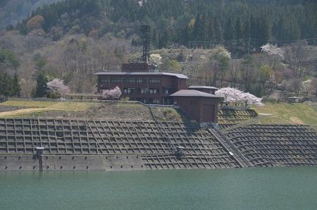 20190423大川ダムの桜03