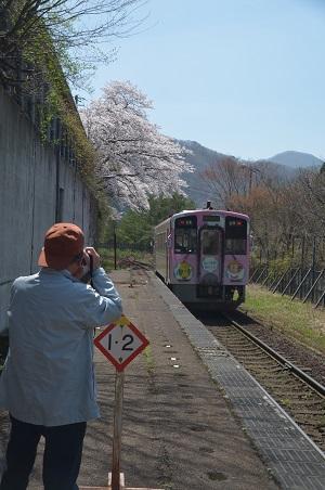 20190423芦ノ牧温泉南駅の桜01